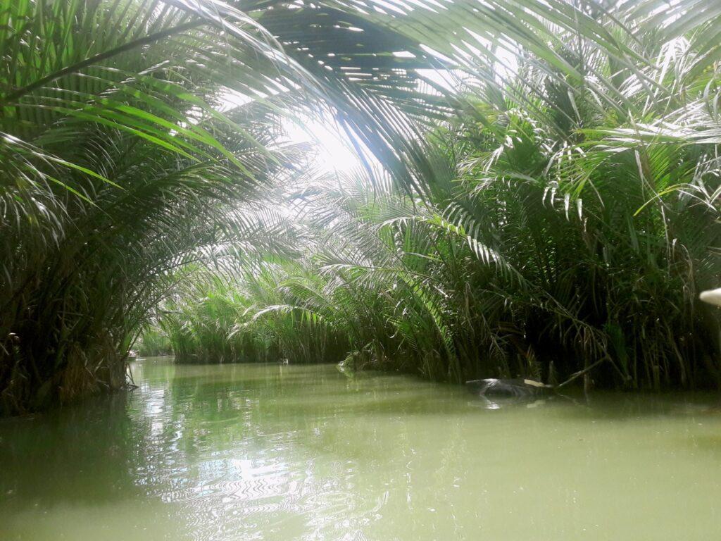 pădurea de palmieri nipa hoi an