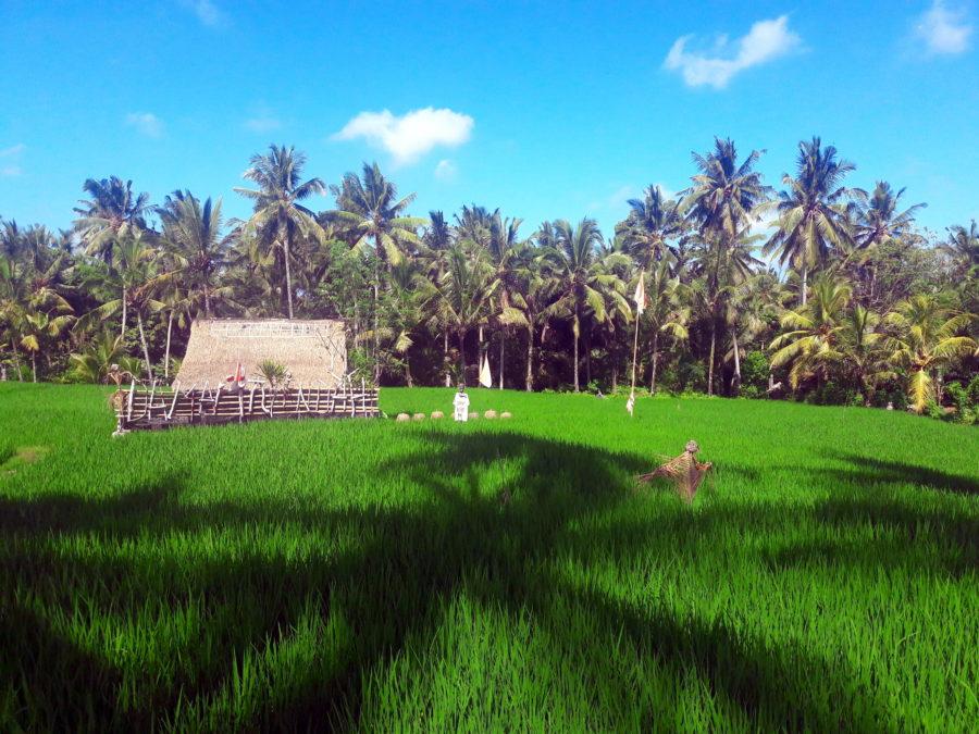 bali indonezia drumetie jalan kajeng walk natura