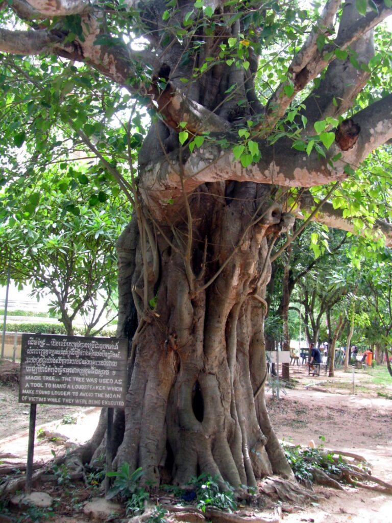 magic tree killing fields phnom penh