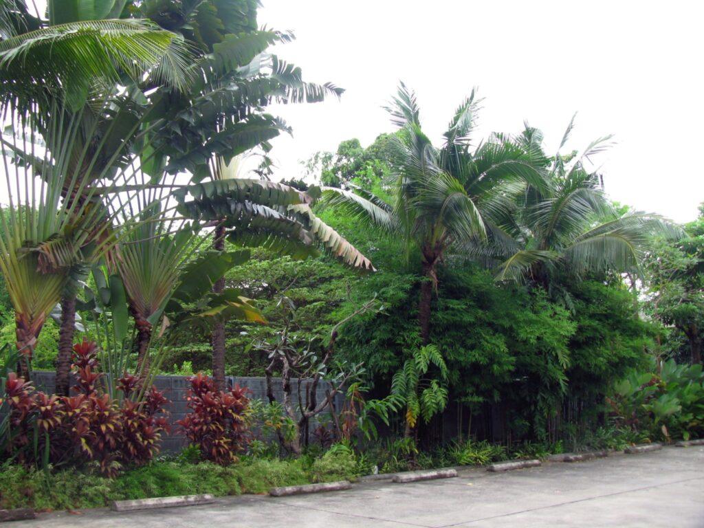 hotel sau hostel curtea refillnow bangkok hostel